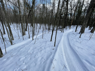 """A smooth ribbon of white for fat tire enthusiasts. We respectfully ask that riders only use 3.8"""" or larger tires at very low pressure when riding the groomed fat bike trails. Thank you. The Groomer."""